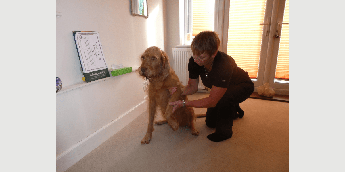 Spinal therapy and canine massage for your dog