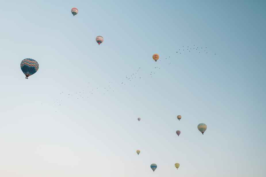 colorful hot air balloons flying in cloudless sky