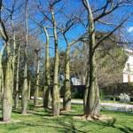 """Un lugar especial y único en Valencia: El bosquecillo de los """"barrigudos"""""""