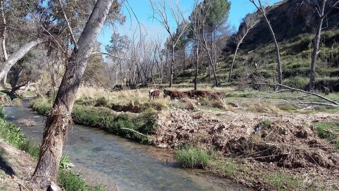 Junto al Río de Chelva. Fuente: Ayuntamiento de Chelva.