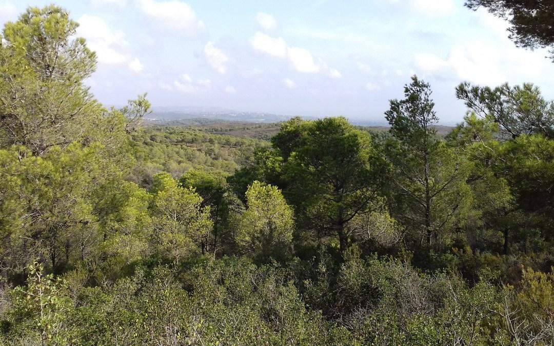 El rincón escondido de la Ribera Alta: el Paraje Natural Municipal de El Tello