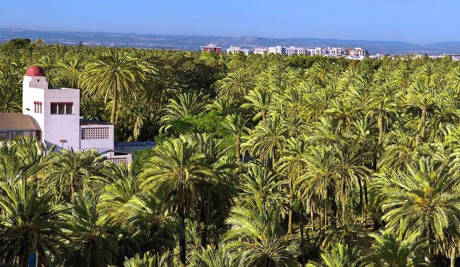 ¿Sabías que el palmeral de Elche, Patrimonio de la Humanidad, es el más grande de Europa?