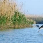 Actividades GRATUITAS por el Día Mundial de las Aves en el festival L'Albufera de les Aus