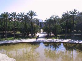 Turia Palmen