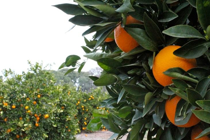 naranjas del carmen.jpg