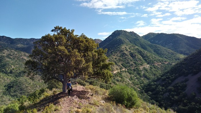Top ten hikes of Sierra Espadán - Cork Oak