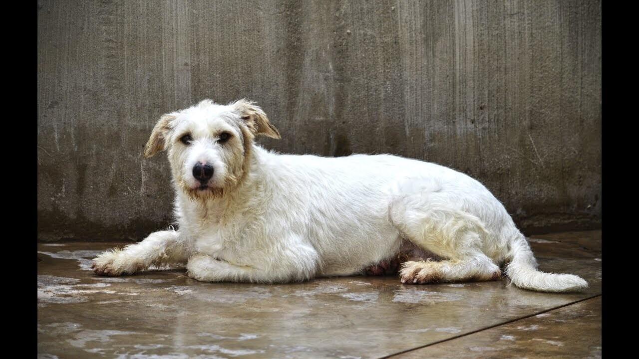 Este domingo a las 12h el desfile pre-navideño para adoptar perros abandonados de A.U.P.A y BIOPARC