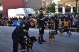 bendición de la fiesta de san Antonio Abad en València 20200117_094858 (73)