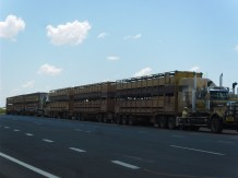 how many cows would you like. there were 8 of these parked at this roadside stop in Longreach