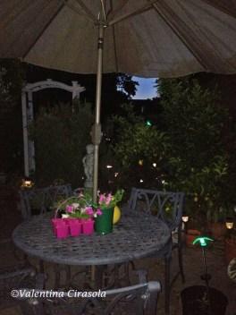 My garden at night
