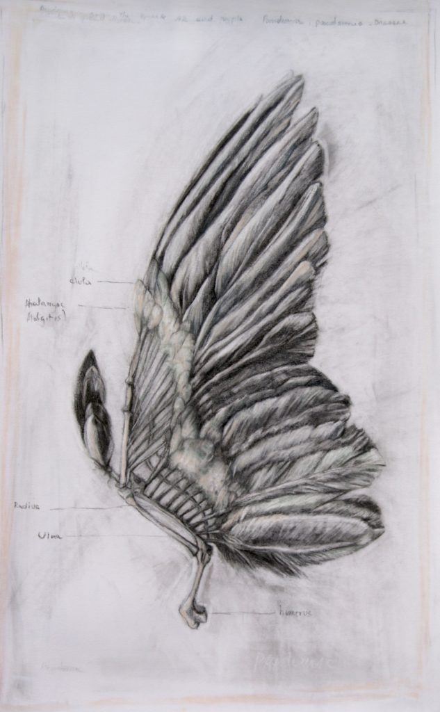 Bird studio