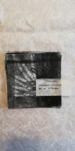valentina-semprini-monoprint (104)