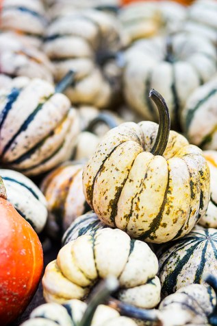 pumpkin_valeriabismar