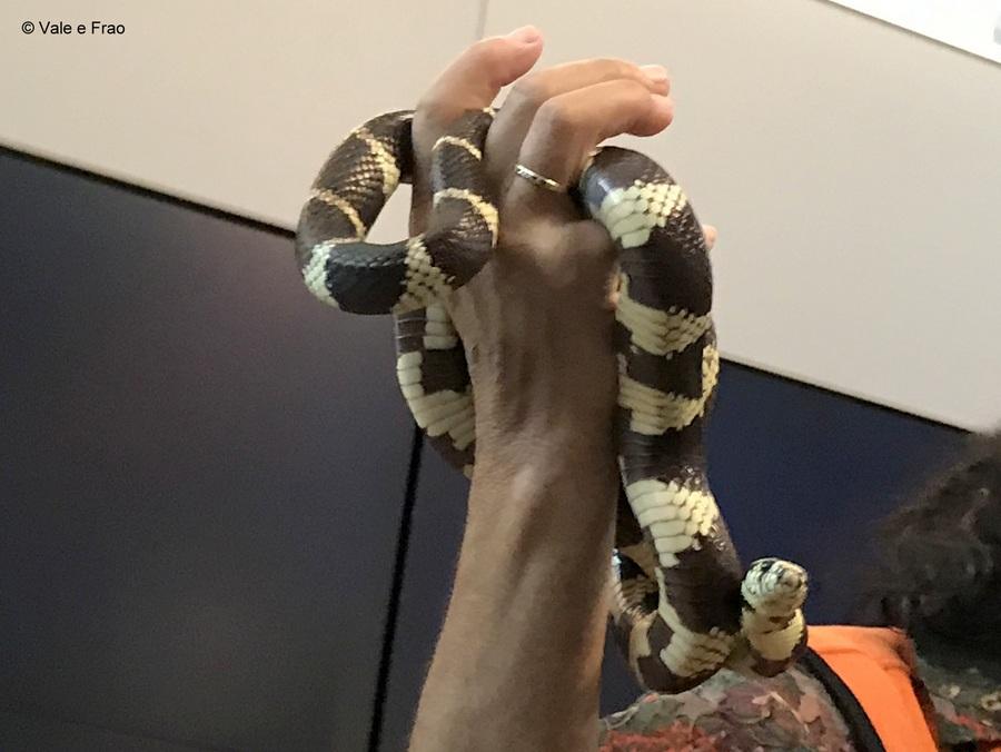 Visitare l' Accademia della Scienza a San Francisco in California serpenti mano