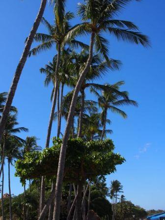 I just love palms
