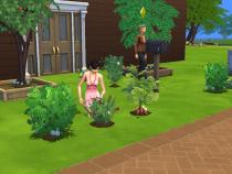 Geisha Gardening