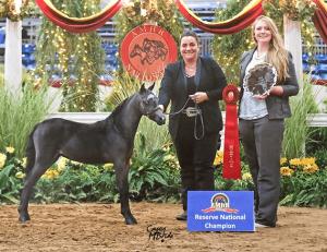 star valhalla farm mini horse national champion