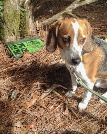 The Disapproving Beagle hasn't always been an enthusiastic geocacher.