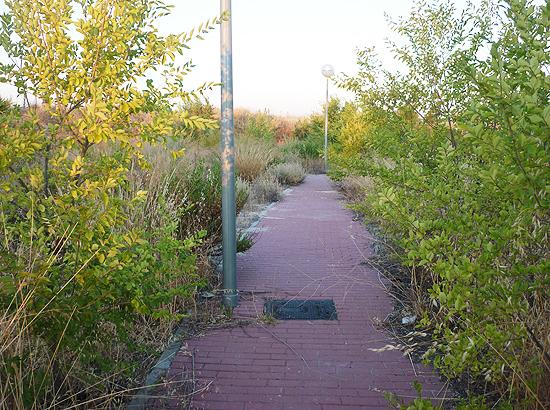 """Una de las sorpresas del """"viaje"""": un paseo adoquinado que no conduce a ninguna parte y sin los inconvenientes de andarte cruzando con gente. (© Foto: D. CÁMER / Vallecasweb.com)"""