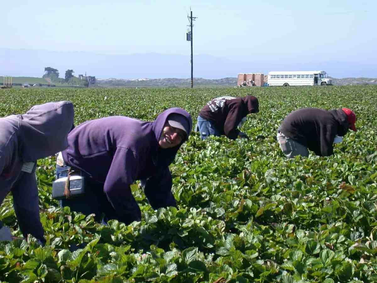 Tarjeta Azul: Iniciativa para Proteger Trabajadores Agricolas Indocumentados