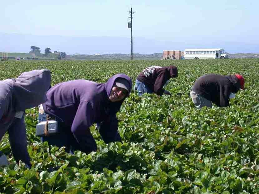 Tarjeta Azul para Trabajadores Agricolas Indocumentados