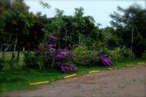 Valle Miraflores Enero 201506