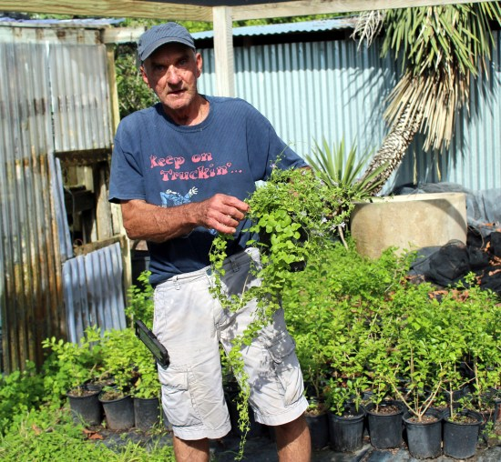 Mike Heep surrounds himself with hardy native plants known to attract birds and butterflies. (VBR)
