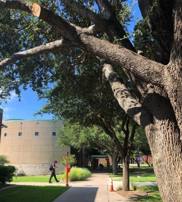 South Texas College has a scholarship specifically for Mission residents, offering up to $3,200 during enrollment.