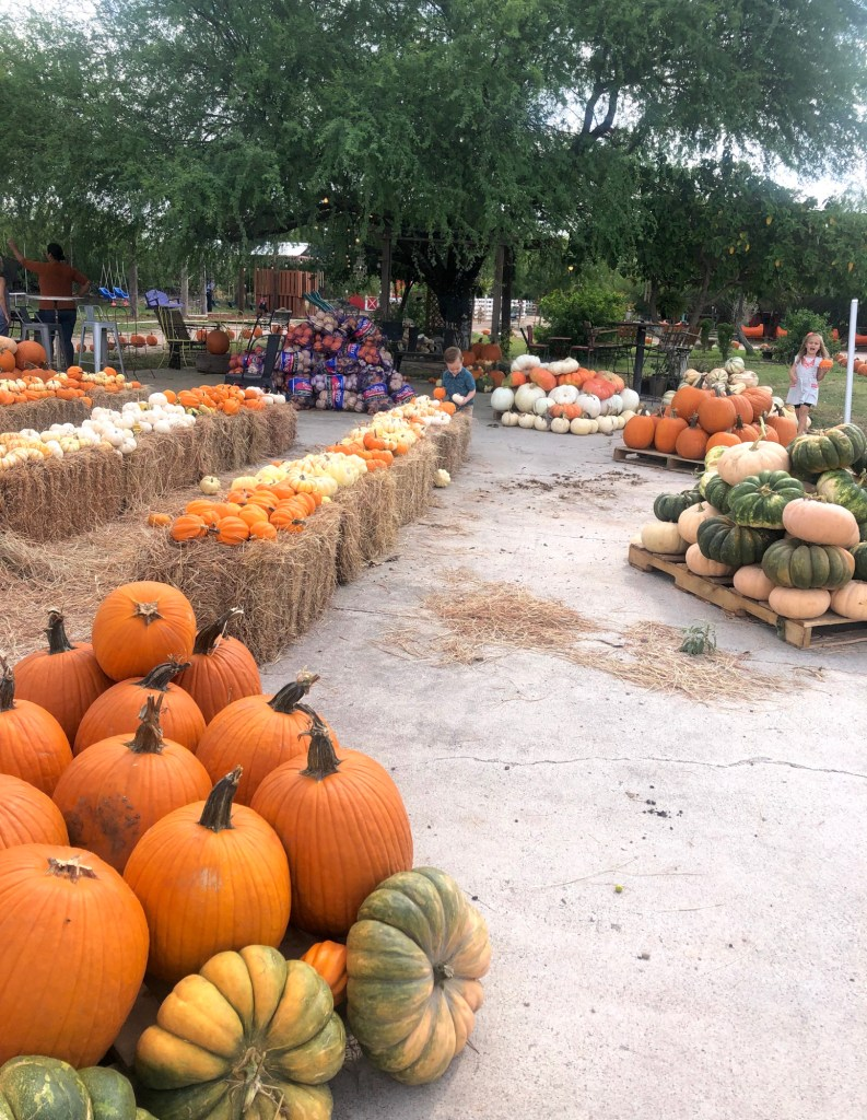 Pumpkins in all sizes and colors lets the kids feel free to choose at their level.