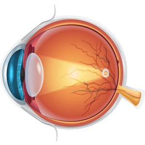 Diagram of normal lens
