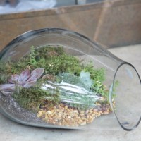 Plant Your Own Terrarium