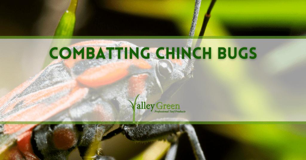 Combatting Chinch Bugs