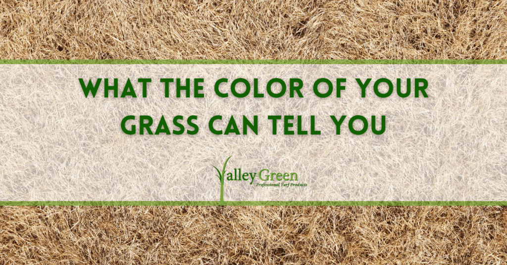 What the Color of Your Grass Can Tell You