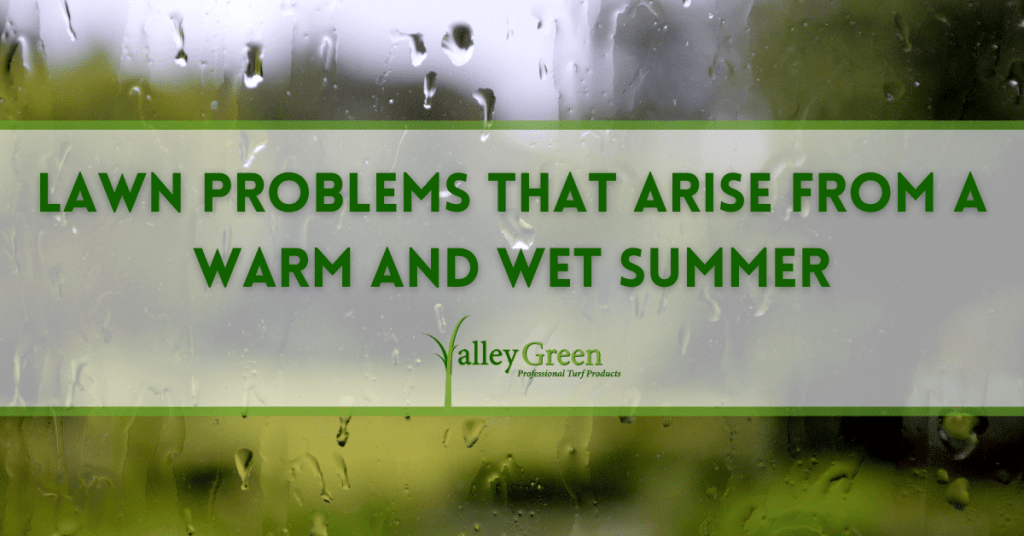 Lawn Problems that Arise from a Warm and Wet Summer