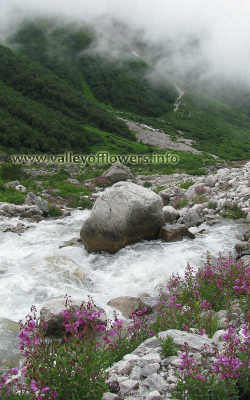 A very beautiful view of Valley of Flowers in the month of July.