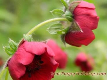 Vajardanti in valley of flowers (4)