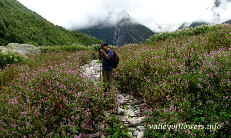 Near the official start point of the valley of flowers. Pink flowers are Impatiens, this flower paints the valley in pink color from July end to August End. This picture was taken in September 1st week, 2012