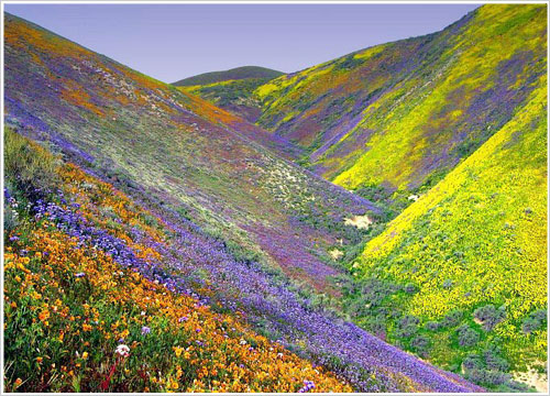 Valley of Flowers Fake Pictures