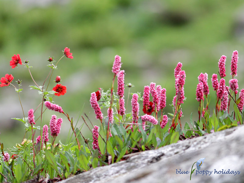 About Valley of Flowers National Park, Uttrakhand, India
