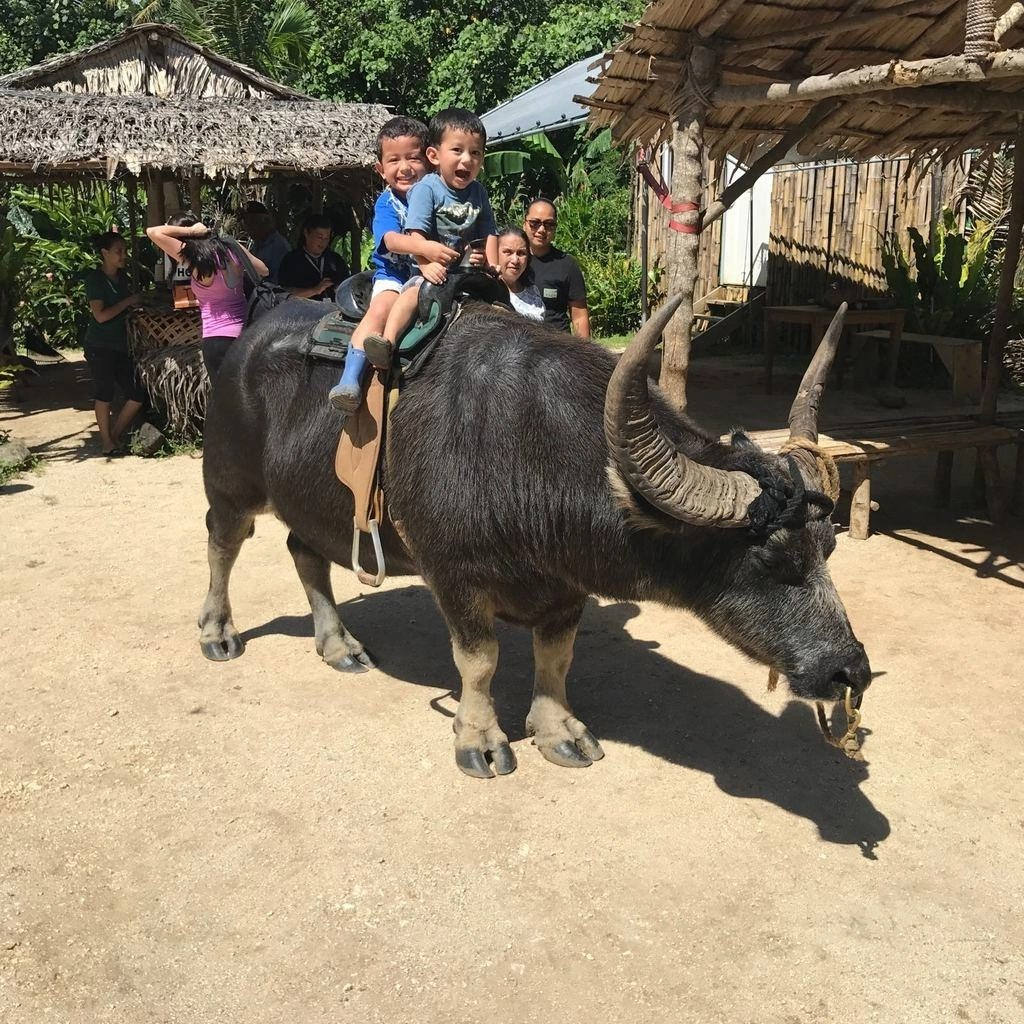 Guam, Things to Do, Karabao Rides, Activities, Tours, Valley of the Latte