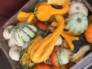 Small Decorative Gourds