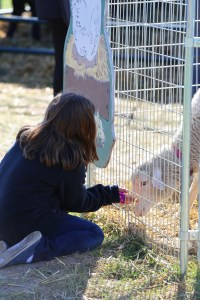 Girl petting sheep