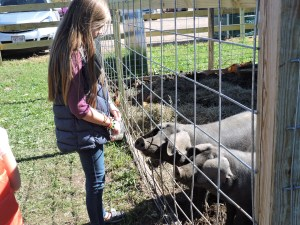 Girl Feeding Pigs