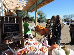 Purchase pumpkins at our produce stand