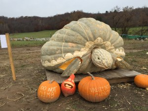 Giant Pumpkin Carving of a Sea Turtle
