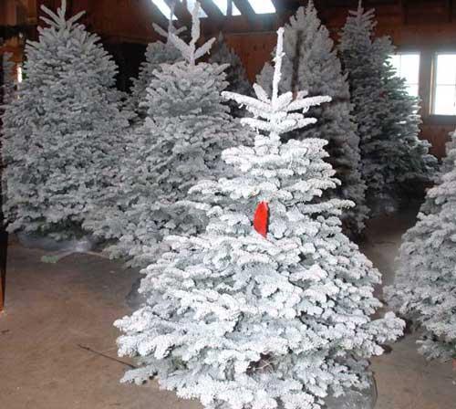 White Flocking Christmas tree