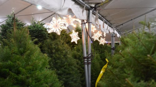 Valley View Christmas Trees