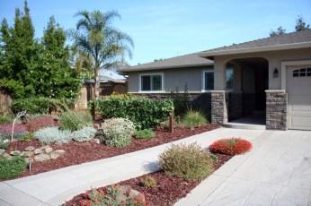 landscape- house palm