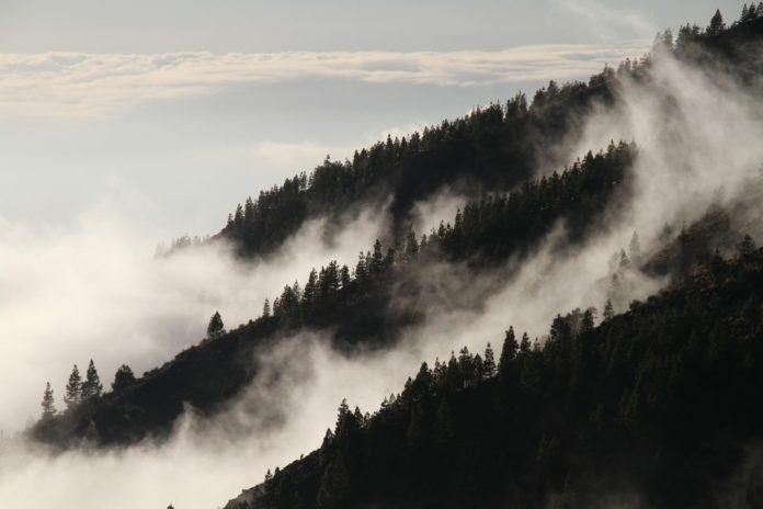 fog-1220491_1920