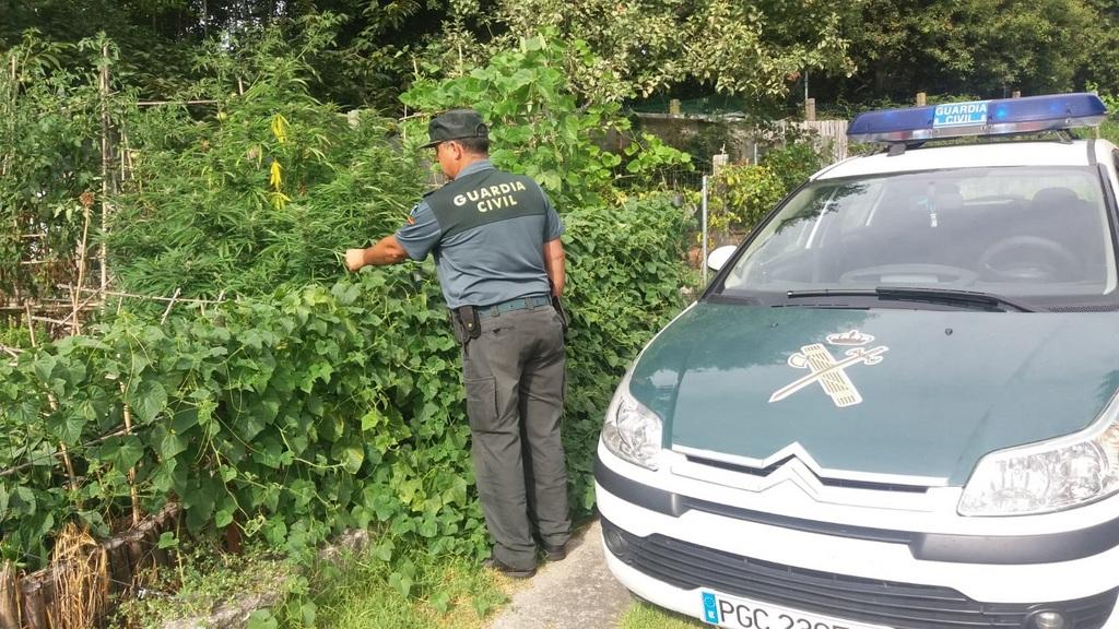 2018-08-29 – 20180829 Plantas marihuana Gondomar Peitieiros